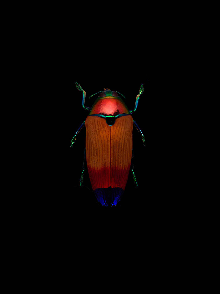 insect-4